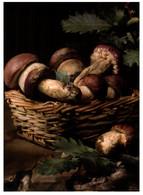 (AA 16) Mushrooms / Champignon - Funghi