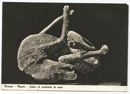 E4260 Pompei (Napoli) - Museo - Calco Di Cadavere Di Cane / Non Viaggiata - Pompei
