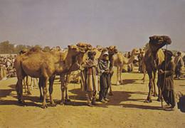 (A-ST192) - GHAZNI (Afghanistan) - Stoockyard - Afghanistan