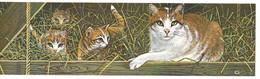 BELGIQUE Carnet 4 Timbres ( Théme Chats ) 2521 2524  Neuf Non Plié - Booklets 1953-....