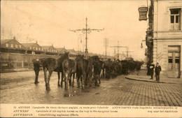 België - Anvers Antwerpen - Cavalcade Oude Engelsche Slacht Paarden Slachthuis - 1912 - Zonder Classificatie