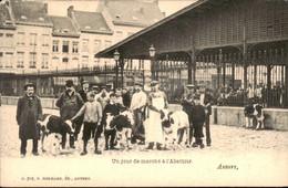België - Anvers Antwerpen - Un Jour De Marche A L Abattoir - 1900 - Zonder Classificatie