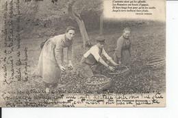 LA   NORMANDIE  Nos Pommiers Normands 1903 - Sonstige