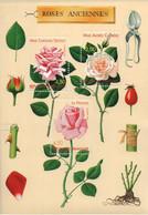 Bloc Feuillet N° 24 Neuf De 1999 Roses Anciennes N°3248 à 3250 - Nuovi