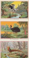 CHROMOS X 18 - Les Oiseaux - Sonstige