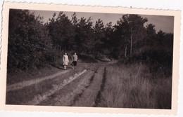 Kasterlee - Sept. 46 - Weg In De Dennenbossen - Foto 6.5 X 11 Cm - Places
