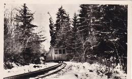 74. SAINT GERVAIS LES BAINS. LE TRAMWAY T.B.M. EN FORÊT. ANNEE 1949 + TEXTE - Saint-Gervais-les-Bains