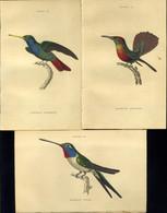 KOLIBRI / Hummingbird  9db XIX Sz. Eleji Színezett Metszet 15*10cm - Non Classificati