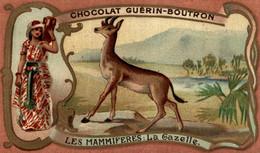 CHROMO CHOCOLAT GUERIN BOUTRON LES MAMMIFERES LA GAZELLE - Guerin Boutron