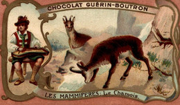 CHROMO CHOCOLAT GUERIN BOUTRON LES MAMMIFERES LE CHAMOIS - Guerin Boutron