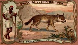CHROMO CHOCOLAT GUERIN BOUTRON LES MAMMIFERES LE CHACAL - Guerin Boutron