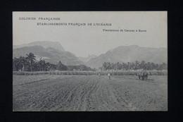 POLYNÉSIE - Carte Postale - Plantation De Cannes à Sucre - L 82475 - French Polynesia