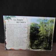 Cpsm   80  CRECY EN PONTHIEU   La Forêt Historique - Crecy En Ponthieu