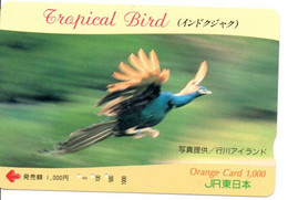 Oiseau Bird Oiseaux  Animal  Tropical Carte Prépayée  Card Japon  Japan (W 343) - Otros