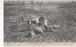 OORLOG / GUERRE / 1914-18 / CHIEN AMBULANCIER HOND - Guerra 1914-18
