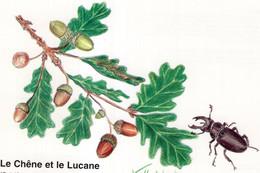 CPM. Le Chêne Et Le Lucane. DE VILLAUTREIX - Sonstige