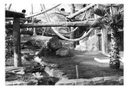SAINT-MARTIN-LA-PLAINE - Parc Zoologique. Serre Des Gorilles - Otros Municipios