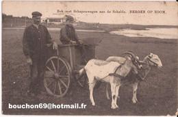 Pays-Bas - Bok Met Schapenwagen Aan De Schelde - Bergen Op Zoom Geit Goat Cart Bokkenwagen - Bergen Op Zoom