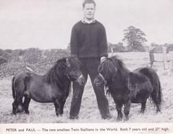 Smallest Horse Twin Stallions In The World Animal PB Postcard - Paarden