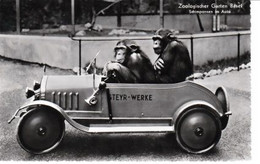 SINGES  EN  VOITURE  - Jardin  Zoologique  De  Bâle   -CPSM  ( 20 : 12 / 293  ) - Apen