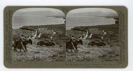 Palestine ~ TABIGHAH SPRING & GENNESARET PLAIN ~ Stereoview Upsa88 - Stereoscoop