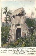 "1905- Post Card "" Giant Tree House, GIPPSLAND  Fr. Queensland Stamps + French Mar. Octog. Postmark - Briefe U. Dokumente"