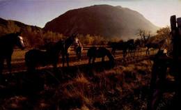 Animaux & Faune > Chevaux  Camargue  /  M 73 - Cavalli