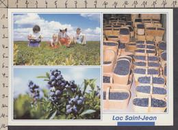 114853GF/ SAGUENAY – LAC-SAINT-JEAN, La Récolte Des Bleuets Au Lac Saint-Jean - Saguenay