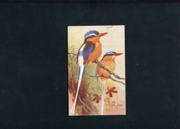 WHITE TAILED   KINGFISHER.(1938)RARE! - Oiseaux