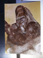 ZOO Jean RICHARD - ERMENONVILLE - Le Gorille King-Kong - Singes