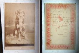 PHOTO GRAND CDV 19 EME J1882 CHIEN CORBERIS DEDICACE AU DOS   Cabinet RICHMOND A  YORKSHIRE - Old (before 1900)
