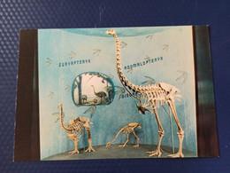 New Zealand  Postcard Bird Moa Dinornis Fossil - Pájaros