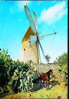 ► MOULIN à VENT - SPAIN  - Manacor Mallorca  1960s    (Windmühle Windmolen Windmill) - Windmühlen