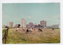 - CPSM RIS-ORANGIS (91) - Les Immeubles 1966 - Photo RAYMON - - Ris Orangis