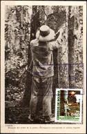 Bolivia 1998. CEFIBOL 1318Tm. Tarjeta MAXIMA EP 1943 (Cobija, Siringuero) Circulada Sello Aniv. Pando (Siringuero). - Bolivia