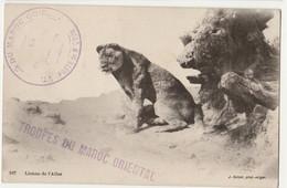 CPA BE-LIONNE DE L'ATLAS Cachet   TROUPE DU MAROC ORIENTAL- Poste De M'COUM-  13/11/1914 - Other Wars