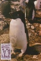 Carte  Maximum  1er  Jour   T.A.A.F   Manchot  Adélie   1980 - Pinguine