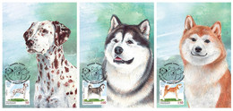 Kirgistan Kyrgyzstan 2020 Delivery Within 4 Weeks MNH ** Mi 161-63 Domestic Dogs Max Card - Kyrgyzstan