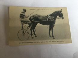 Jockey Hippisme.cheval .goodness Queen - Hípica