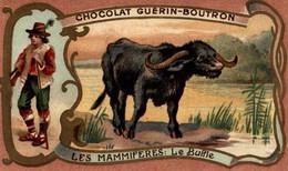 CHROMO CHOCOLAT GUERIN BOUTRON LES MAMMIFERES LE BUFFLE - Guerin Boutron