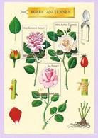 B42 FRANCE BLOC YT 24 Congrès Mondial Des Roses Anciennes 1999  - Neuf ** - Nuovi