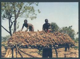 BENIN Province Du Borgou PARAKOU Grenier De Mil Ferme Oredola - Benin