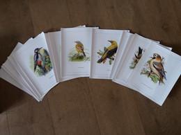 Buzin Box Compleet Inclusief Alle Illustraties - 1985-.. Pájaros (Buzin)