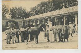 AFRIQUE - ALGERIE - TIARET - Chaou-Chaoua , Jumenterie - Tiaret