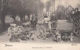 Belgique. Laitiers - Attelage De Chiens - Sonstige