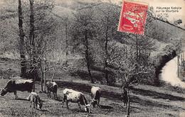 KABYLIE - Pâturage Kabyle Sur Le Djurjura - Scenes