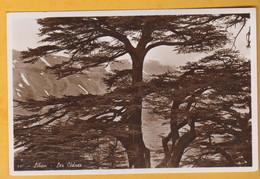 Liban - Les Cèdres - CAD Beit Mery - Libano