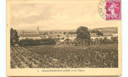 49* CHALONNES SUR LOIRE Et Ses Vignes - Chalonnes Sur Loire