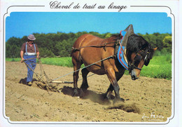 CHEVAL DE TRAIT AU BINAGE - Spannen