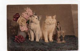DC1357 - Schöne Motivkarte Katzen Cats Cat Katze - Gatos